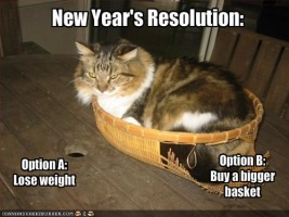Cat New Years Reolutions